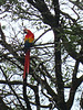 Colorful guacamayas (large parrots) flew freely around the site.
