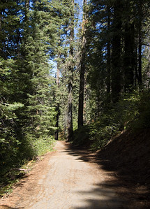 Tuolumne Grove Trail (1)