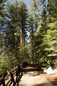 Tuolumne Grove Trail (4)