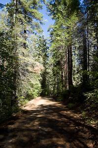Tuolumne Grove Trail (3)