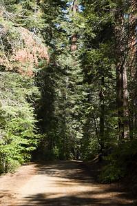 Tuolumne Grove Trail (2)