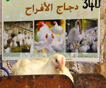 Fes, Medina - does this mean they're free range?