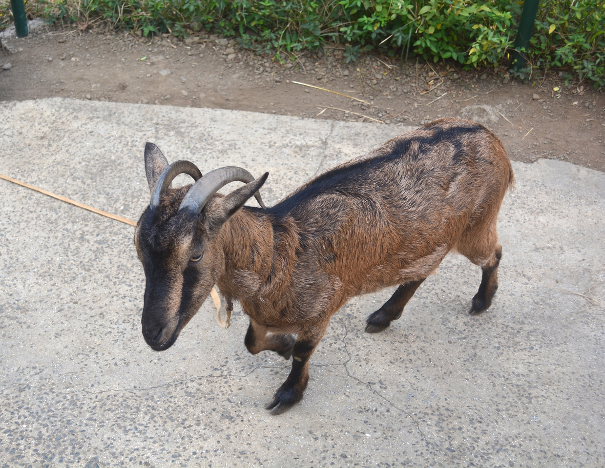At the top of a short hike, a couple had a dog and this goat. We didn't ask questions.