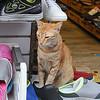 Jordan Shop Cat Nov 17