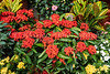 Closeup of flowers in the Flower Market of Kowloon, Hong Kong, China, Asia.