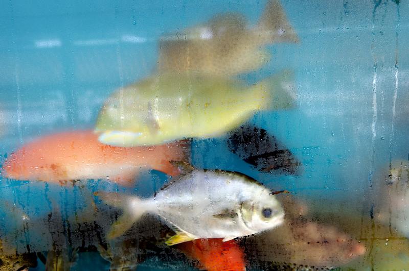 Aquarium dans un restaurant de poissons du port de l'ile de Cheung Chau. Hong Kong/Chine