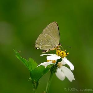 Micro Lepidoptera
