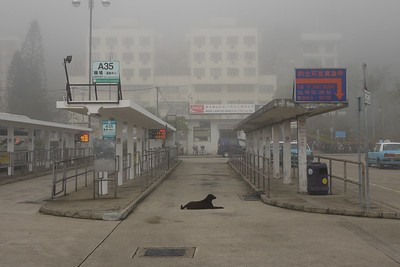 Dog in the Fog. Mui Wo