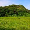 Field near Tung O Wan