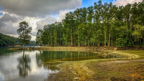 Shing Mun Reservoir 2014