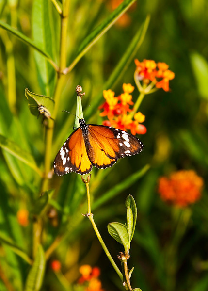 The park has an area devoted to Butterflies.