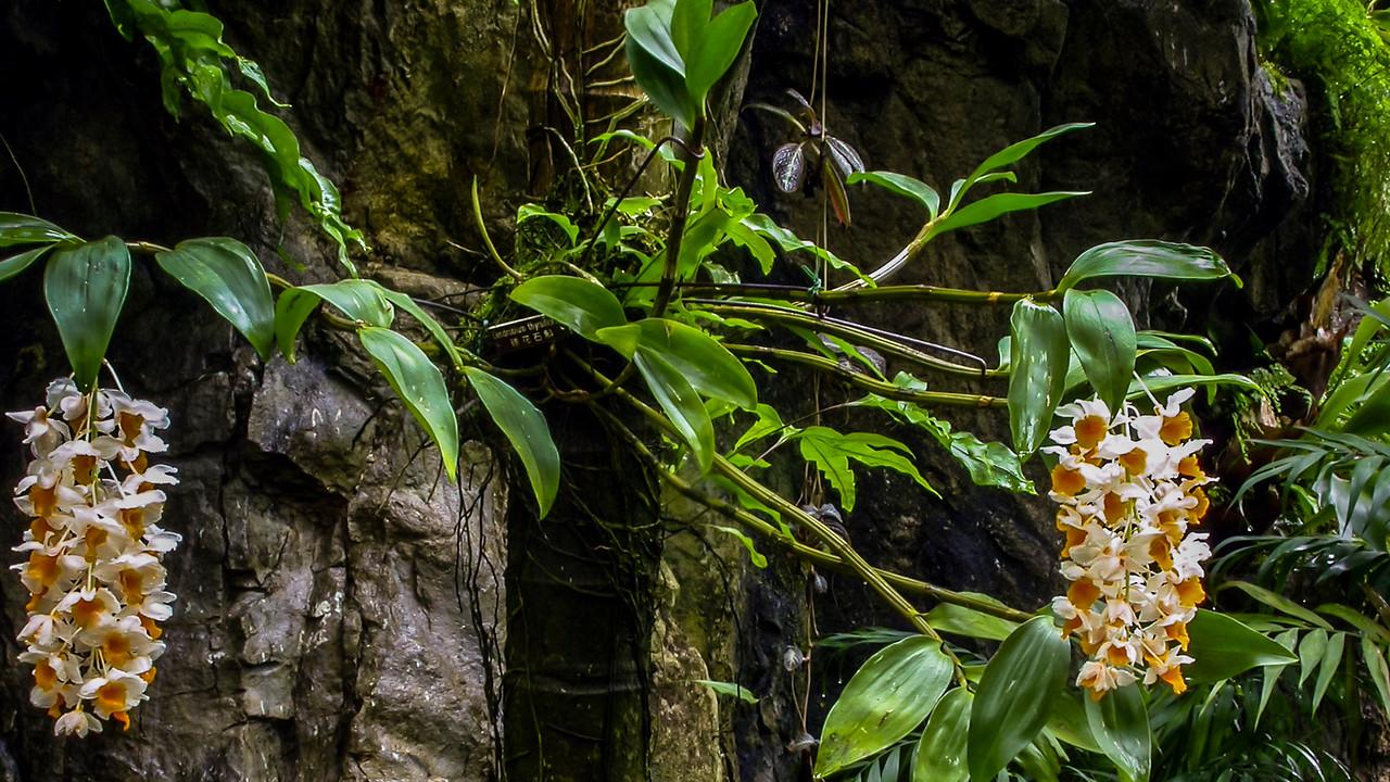 Hong Kong Zoological & Botanical Gardens