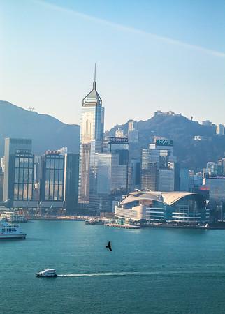 Kites in Hong Kong