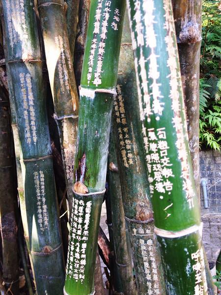 Bamboo Strokes