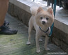 A very cute dog  photographed in Hong Kong in July 2009