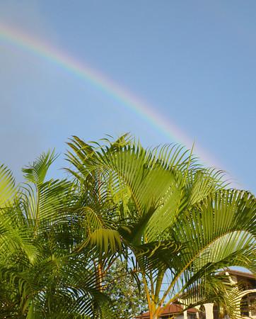 Hawai'i Trees