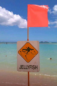 Jellyfish Warning Sign