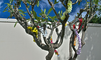Leis in a Tree