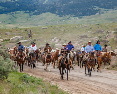 Hell's A-Roarin' Horse Drive 2017.  Owners and staff of the Hell's A-Roarin' Ranch and Outfitters drive the horses from Gardiner up Jardine Road to the Ranch.  This photo won First Place in the People Category, Adult Advanced Division, Big Sky Country State Fair 2018, Bozeman, MT.