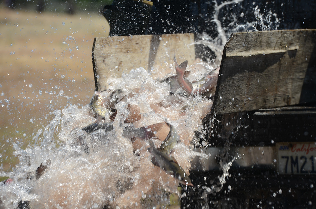 . Horseshoe Lake is stocked with catfish for Hooked on Fishing, May 18, 2018,  in Chico, California. (Carin Dorghalli -- Enterprise-Record)
