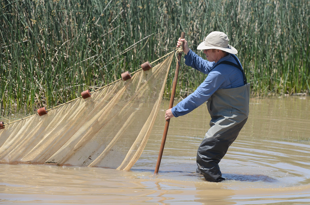 . Eric See catches fish in Horseshoe Lake to put into aquariums for kids to see during Hooked on Fishing, May 18, 2018,  in Chico, California. (Carin Dorghalli -- Enterprise-Record)