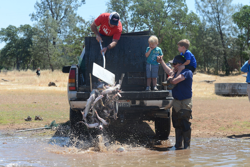 . Jett Bernedo, Chris Giampaoli and Lucas Caldwell watch as Lance Bundy pours catfish into Horseshoe Lake, May 18, 2018,  in Chico, California. (Carin Dorghalli -- Enterprise-Record)