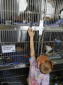 Stretching for connection, a kindergarten from Hooker Oak Elementary reaches up to touch the paw of a cat as he and his class visit the Butte Humane Society Cat Adoption Center to read to the cats March 22, 2016 in Chico, Calif. (Emily Bertolino -- Enterprise-Record)