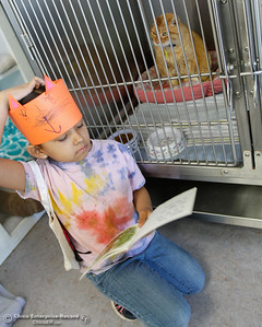 Anna Diaz reads to a cat at the Butte Humane Society's Cat Adoption Center March 22, 2016 in Chico, Calif. She and her Hooker Oak classmates visited the center for a community service project and to practice reading. (Emily Bertolino -- Enterprise-Record)