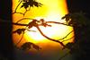 Vigo County Sunset