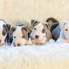 puppies-group