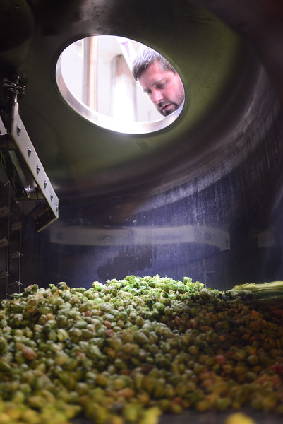Greg Doroski looks at wet hops Threes Brewery