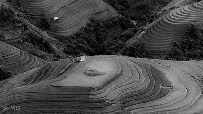 Graphism in Rice Fields