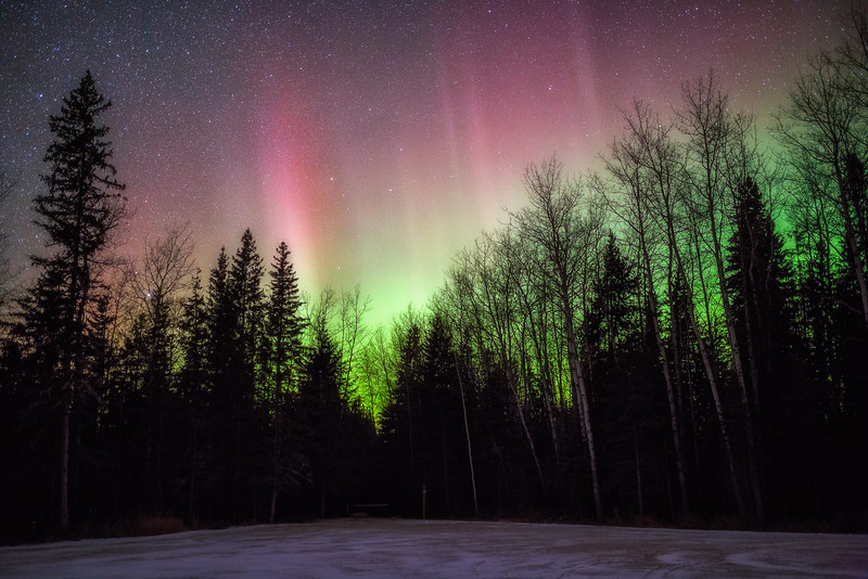 Northern Lights Above the Trees