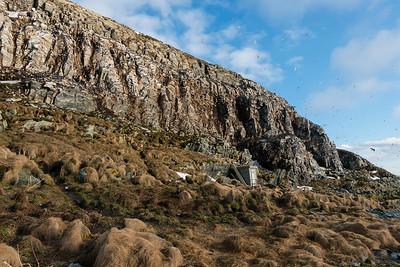 The bird cliffs on the west side, Hornøya, Vardø, Varanger, North Norway.