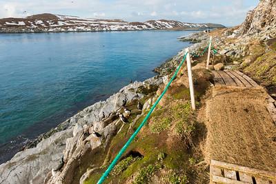 Below the bird cliffs on the marked trail, Hornøya, Vardø, Varanger, North Norway.