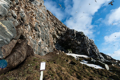 The bird cliffs on the west side of Hornøya, Vardø, Varanger, North Norway.