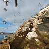 The marked visitor's trail below the bird colonies at Hornøya, Vardø, Varanger, North Norway.