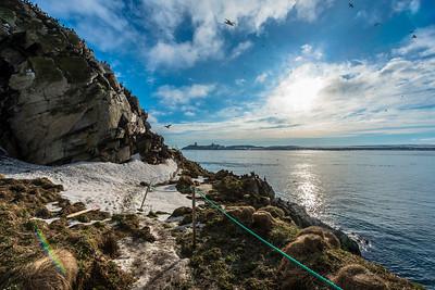 The bird cliffs, Hornøya, Vardø, Varanger, North Norway.