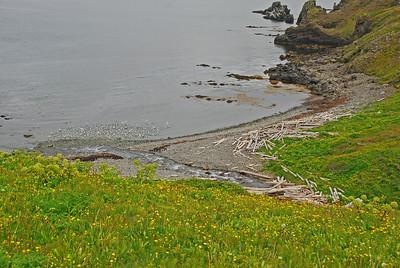 Rekinn í Rekavík
