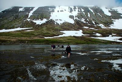 Sturla á leið yfir Veiðileysufjörð