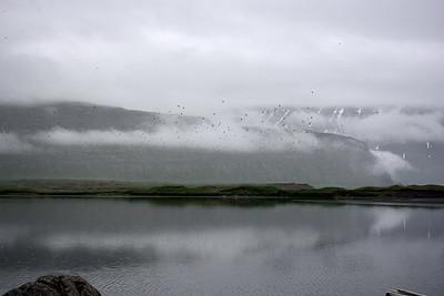Fuglar í Hornvík