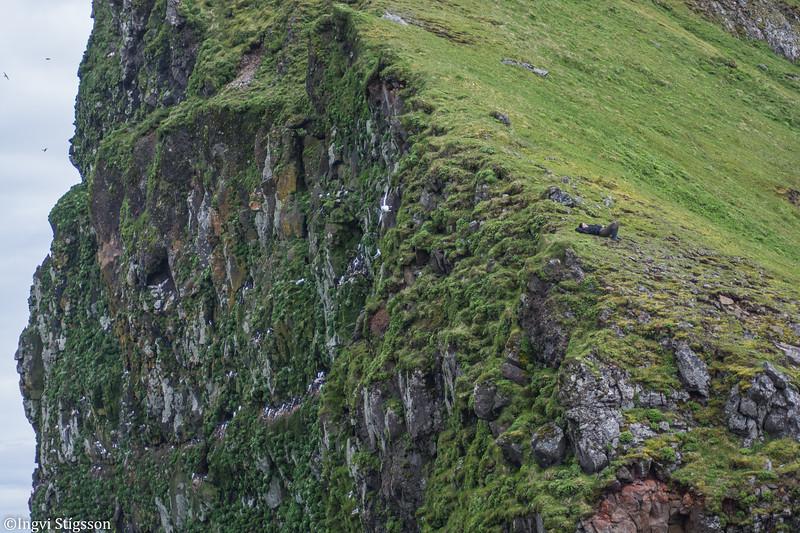 Chantal við Harðviðrisgjá