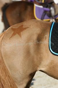 Rolex Dressage 026