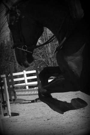 Fox Crossing Equestrian LLC  04/18/2015