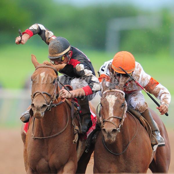 Horse Derby