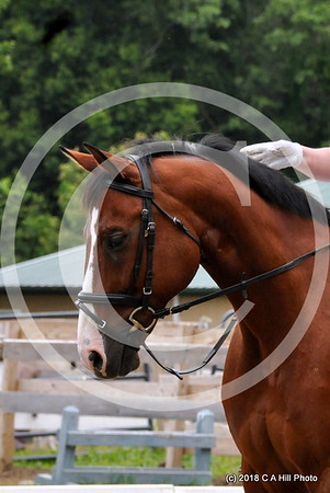 2018.06.23 JH Eventing Dressage scrimmage