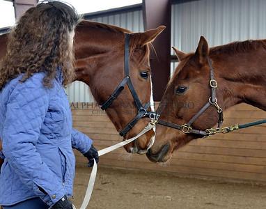 Dawn Fisher Riding Academy in Colorado