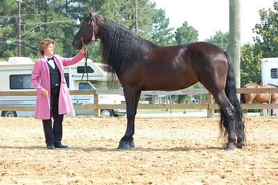 North River Riding Club Horse Show 6-27-09 Gordo 052