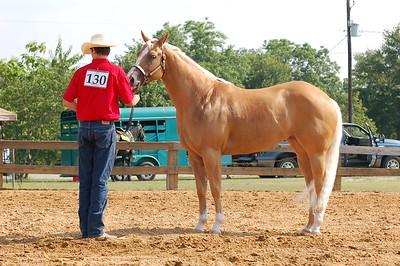North River Riding Club Horse Show 6-27-09 Gordo 043