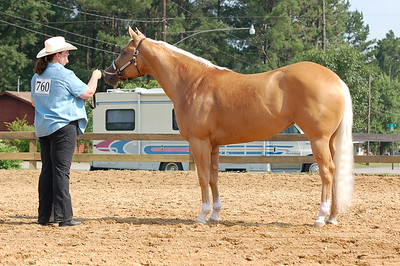 North River Riding Club Horse Show 6-27-09 Gordo 040